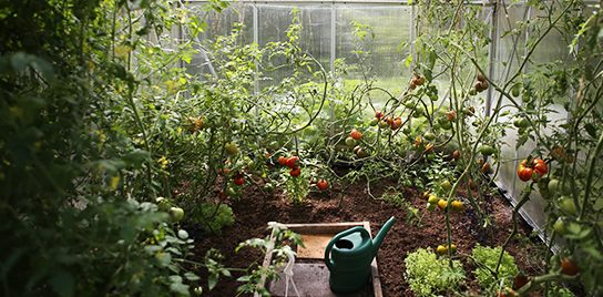 A vegetable garden in a greenhouse.