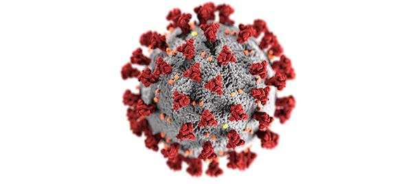 CDC illustration of a coronavirus, like COVID-19.