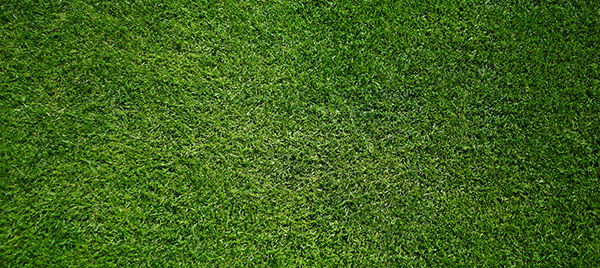 Is the grass really greener, or is it artificial?